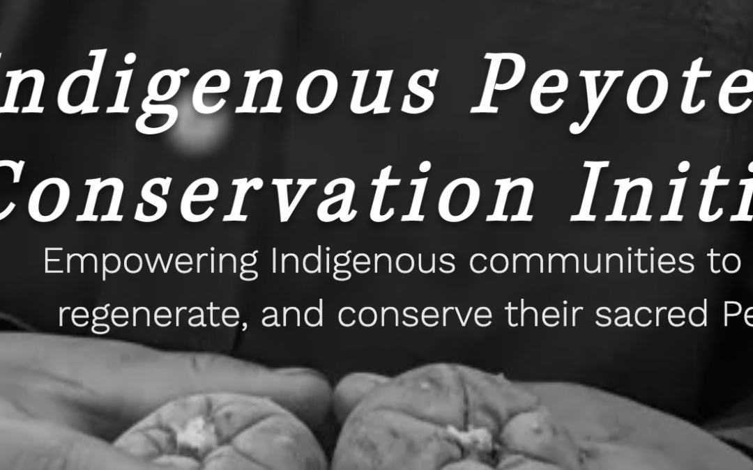 Open Letter to the Psychedelic Movement Regarding Peyote in Policy Efforts and How to be an Ally to Indigenous Peoples of North America